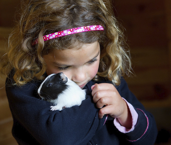 Landhoeve op de Veluwe-Care for your own Guinea Pig mid or w'end