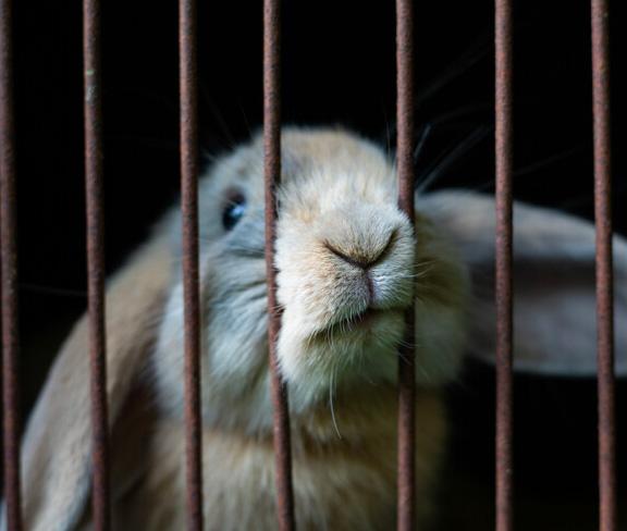Landhoeve op de Veluwe-Private Rabbit