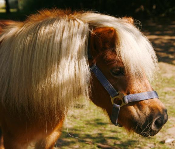 Upper Shadymoor Farm-Pony Craft
